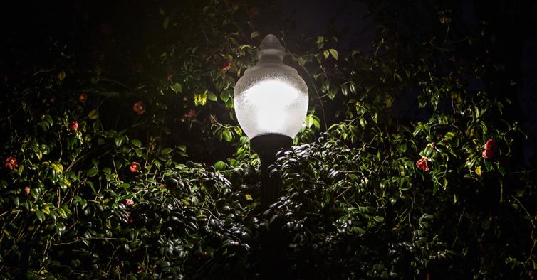 Vai poder ver morcegos à noite nos Jardins do Palácio de Cristal
