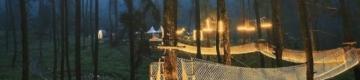 Esta ponte suspensa que dá luz a uma floresta parece um lugar encantado