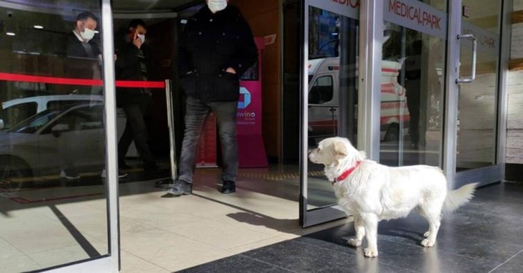 Este cão esteve 6 dias à porta de um hospital à espera do dono que estava internado