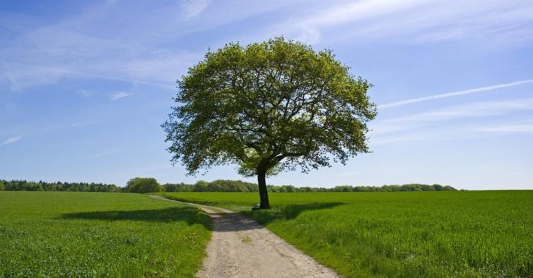 Há uma árvore em Portugal que pode ser considerada a melhor da Europa