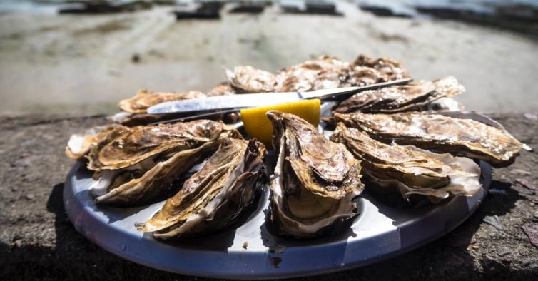 O maior segredo da Comporta: o Adjuto vende um quilo de ostras por 3,50€