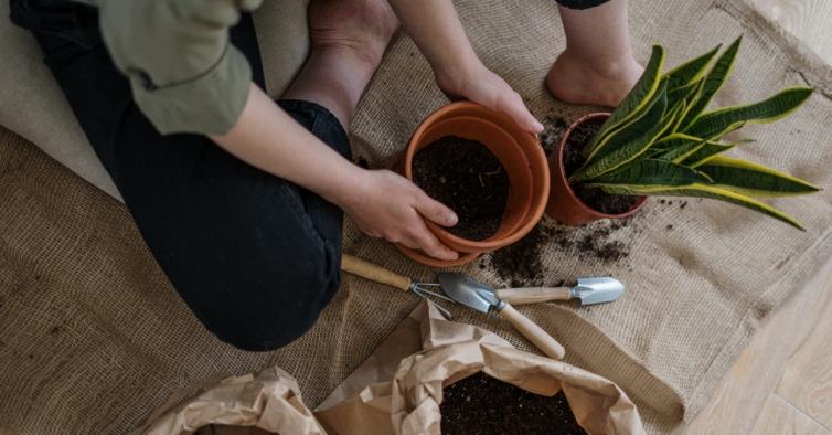 Precisa de borras de café para cuidar das plantas lá de casa? A Nestlé oferece